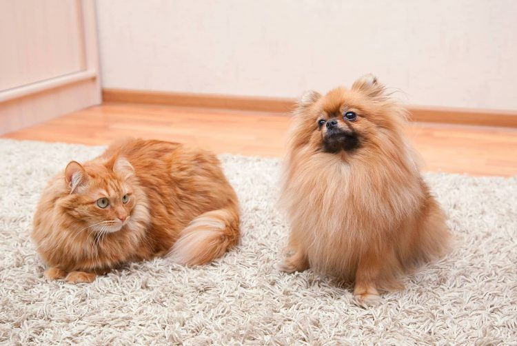 What materials are the most pet-proof?