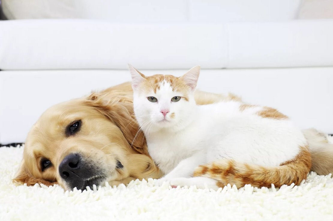 Let's take a look on how to find the best pet-friendly rug.